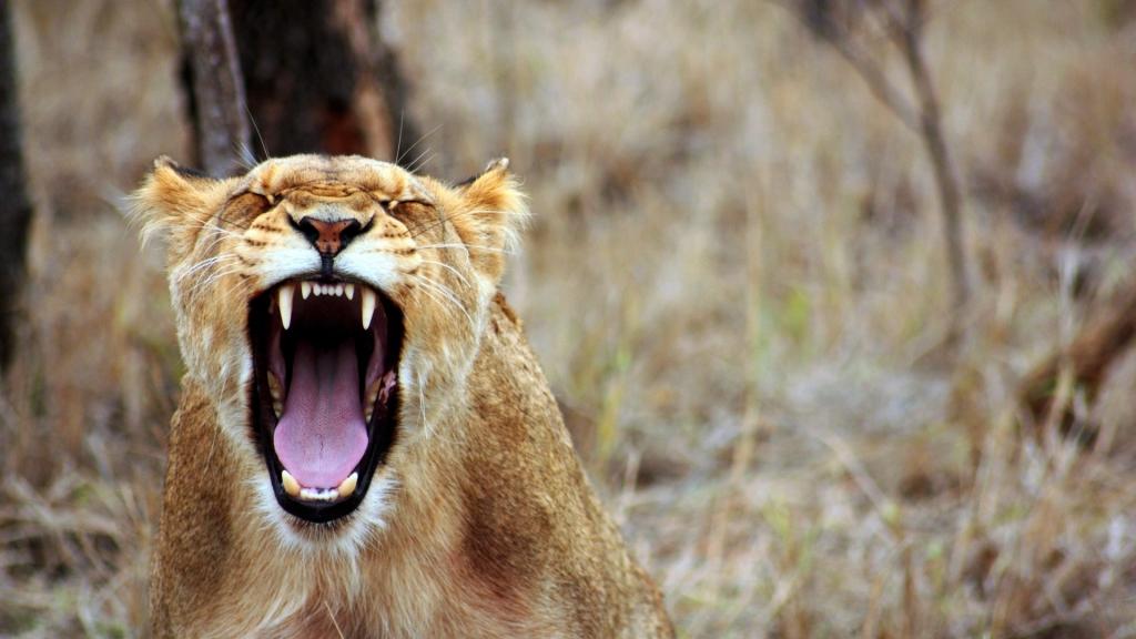 Zorn ist eine natürliche Emotion